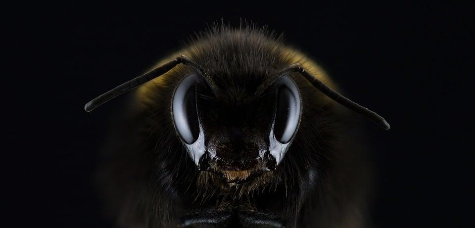 Différence abeille guêpe : comment les distinguer ?