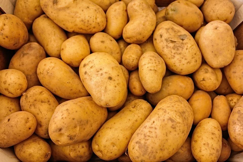 Pomme de terre germée : quelques informations utiles