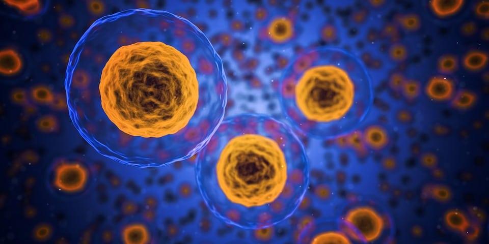 Acétylcystéine : comment consommer ce dérivé d'acide aminé ?