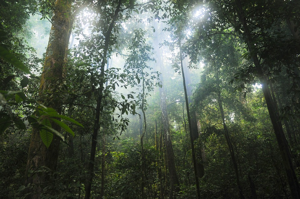 Ipéca : découvrez les bienfaits de cet arbuste sur la santé