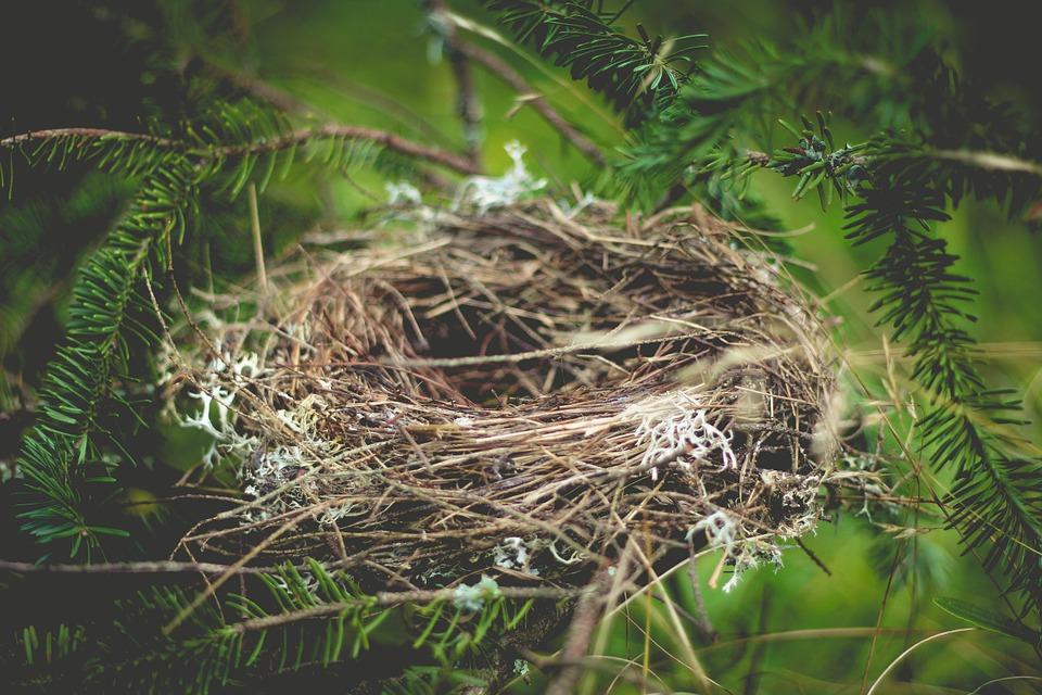 Saignement nidation : quelle interprétation ?