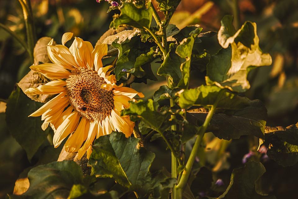 Pollen de fleur: un produit très bénéfique