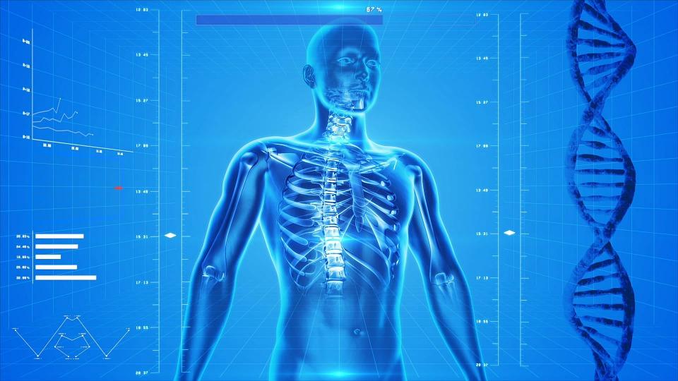 Trachée : anatomie, utilité et douleurs liées à cet organe