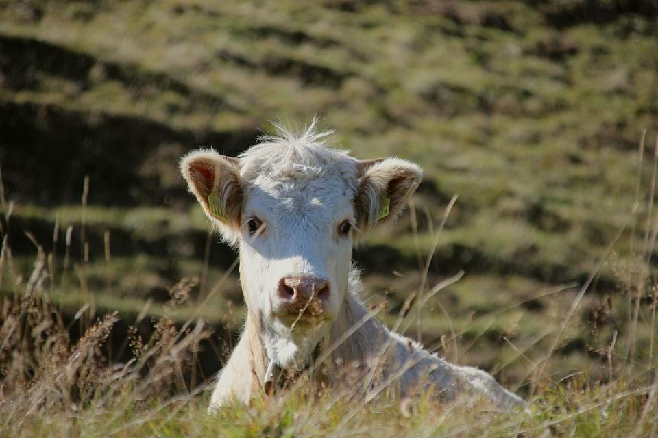 La viande de grison : sa provenance, sa conservation et sa consommation
