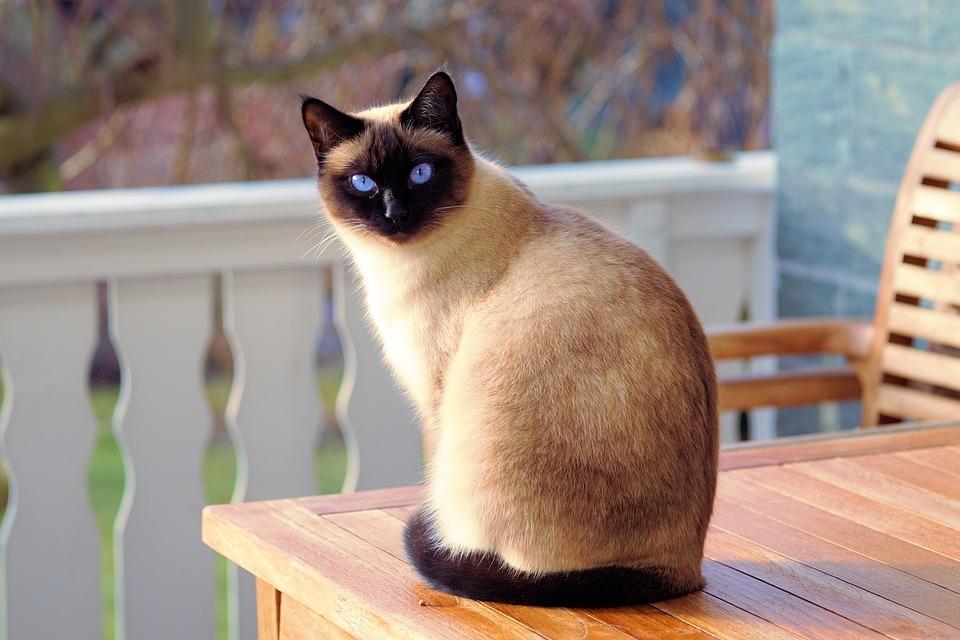 Lit chat : en finir avec le pipi sur le lit
