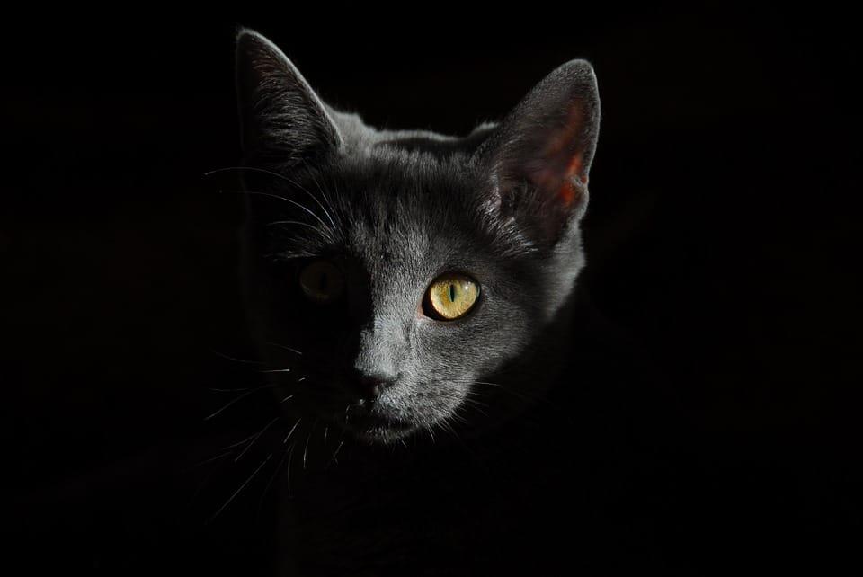 Répulsif naturel chat : que faut-il savoir ?