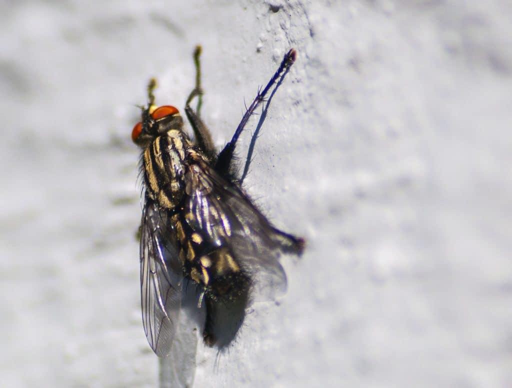 Se débarrasser des moucherons au plafond: comment faire?