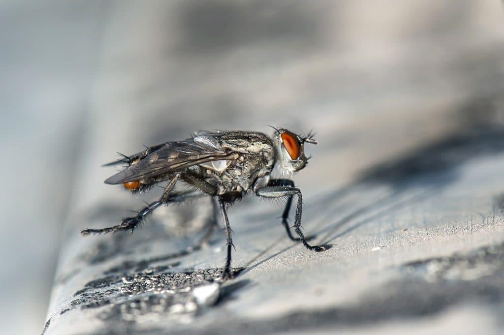 Anti-mouche: comment en concevoir?
