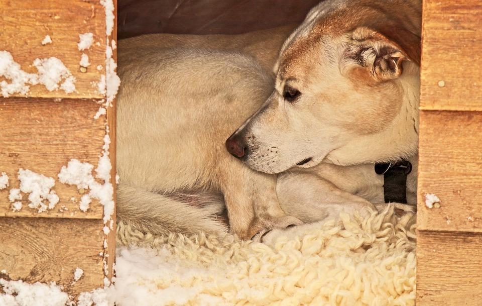 Niche pour chien : ce qu'il faut savoir