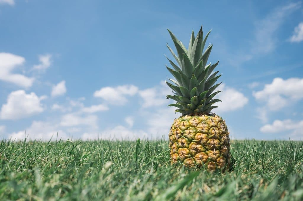 faire pousser ananas