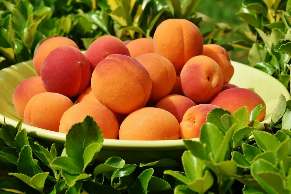 Huile d'abricot: composition et bienfaits!