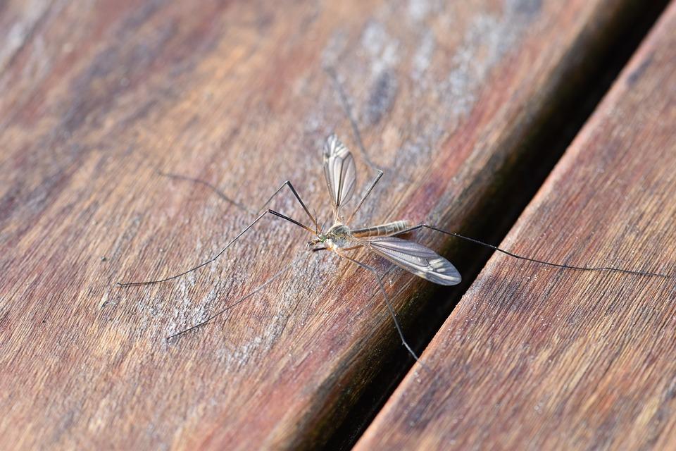 Allergie piqûre moustique : comment réagir ?