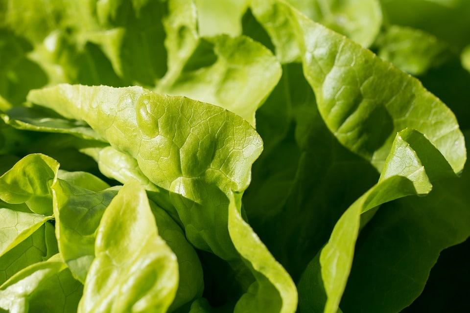 Salade de pâtes au surimi : comment la concocter ?