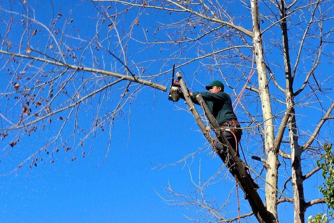 elagage arbre