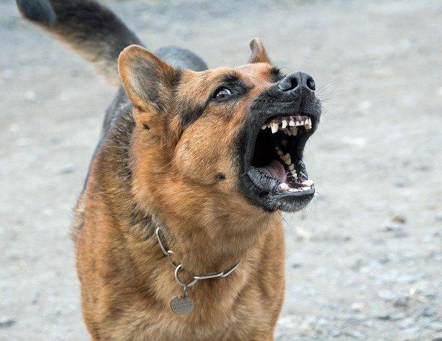 assurance chien catégorie 1