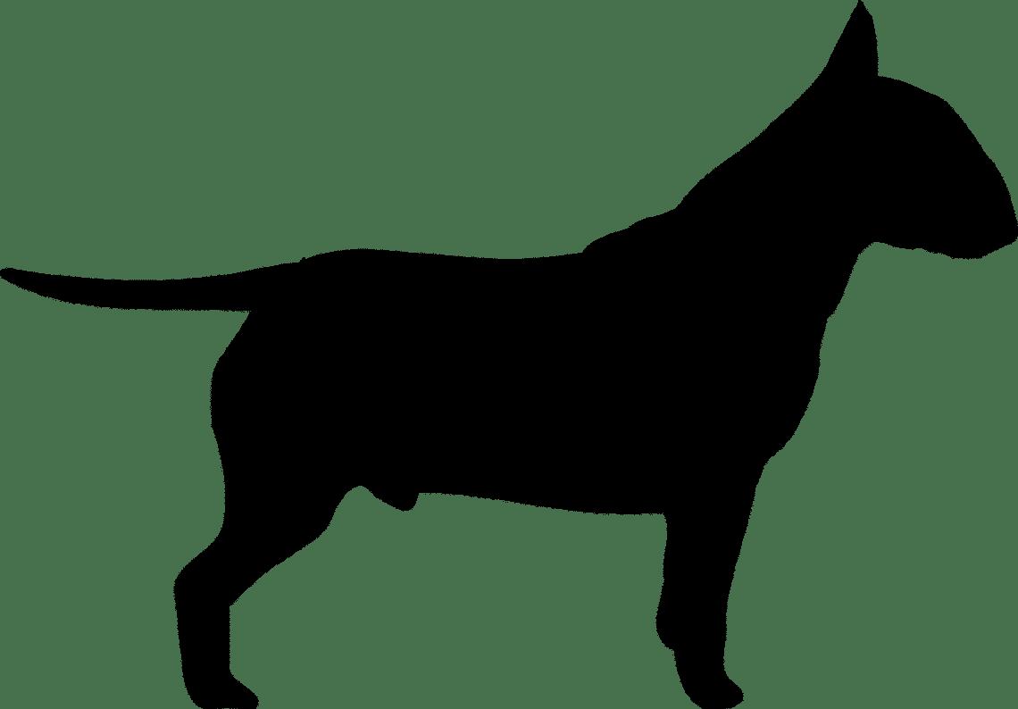assurance pour son chien de catégorie 1